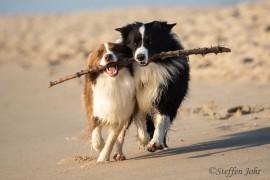 Hundestrände und Hundewege auf Sylt