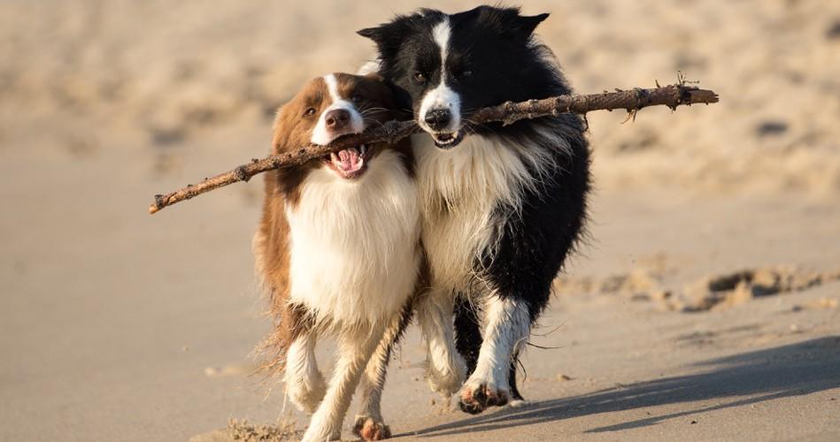 Hundestrände auf Sylt
